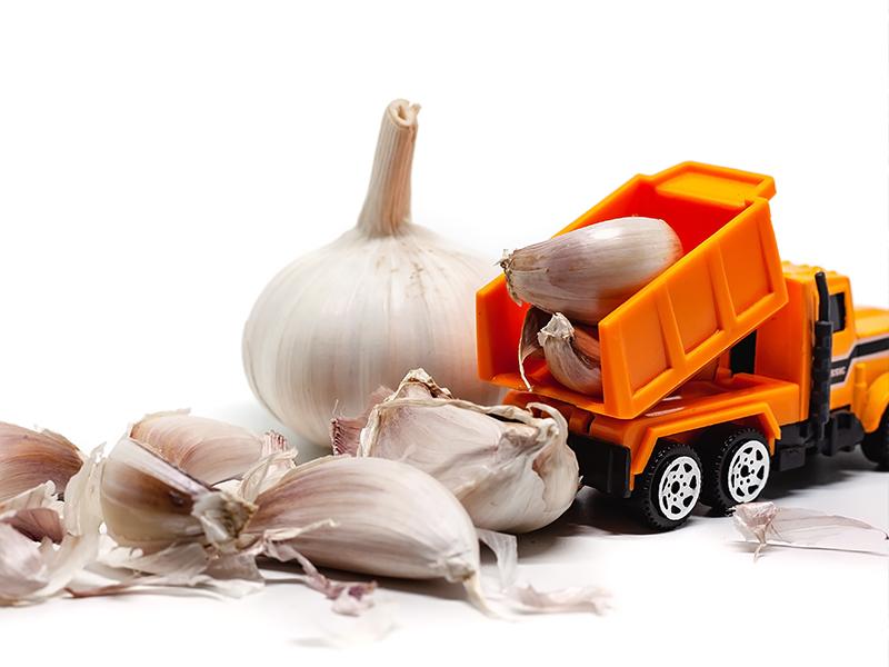 Transportul intern și internațional de cereale, fructe oleaginoase și semințe